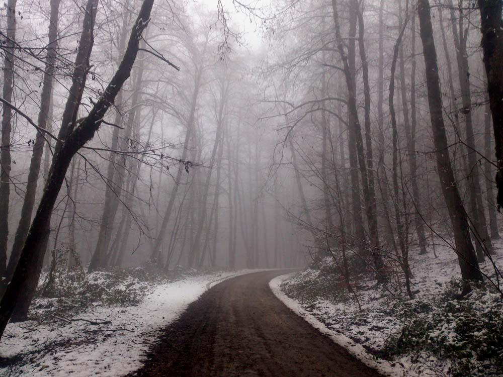 زمستان  1393 جنگل دارابکلا